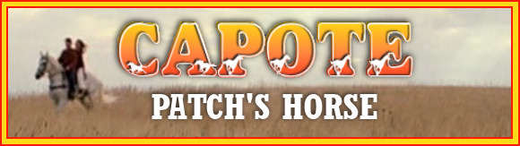All about Capote who portrayed Patch's horse